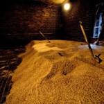 Barley in kiln